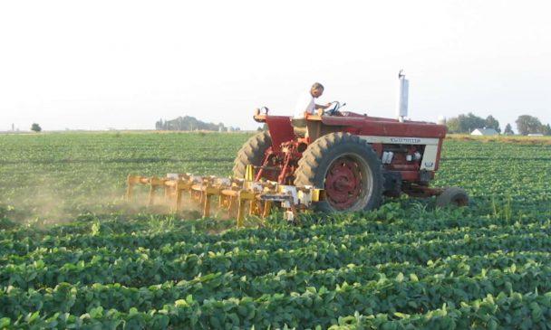 तीन सालों में दरभंगा की खेती हो गयी चौपट, किसान नेता ने बतायी वजह