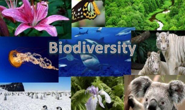 संयुक्त राष्ट्र का यह महा सम्मलेन कस सकता है जैव विविधता के नुकसान पर लगाम